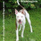 Binnington