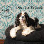 Duchess Petunia