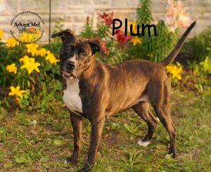 Saving Death Row Dogs | A 501(c)3 non-profit rescue