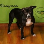 Shaynee