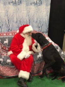 Santa Pictures @ PetSmart